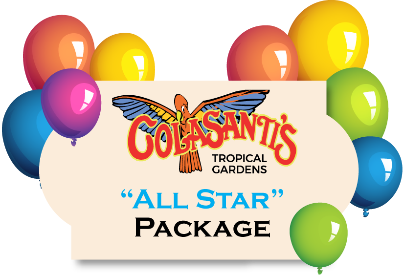 Birthday Party Activity Card (All Star Package) -Colasantis