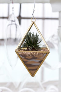 Sand Art Terrarium made at Colasanti's