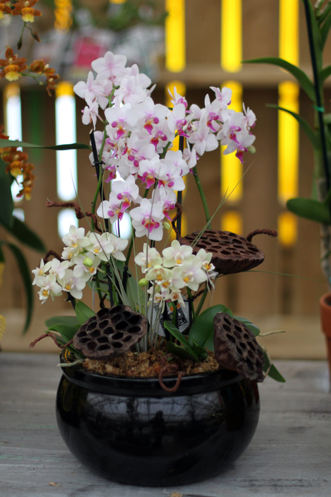 Orchids at Colasanti's Tropical Gardens