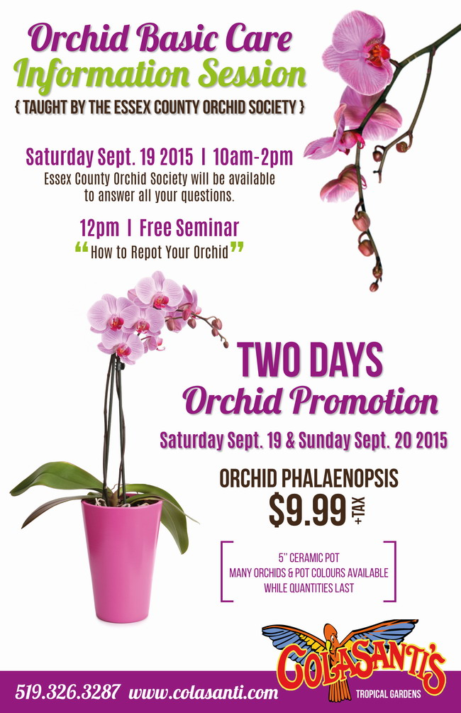 Orchid Promotion Flye