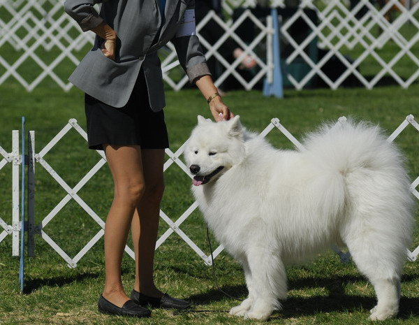 Dog Show At Colasanti's Tropical Gardens