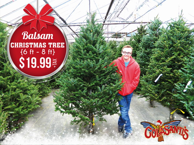 $19.99 Christmas Trees at Colasanti's