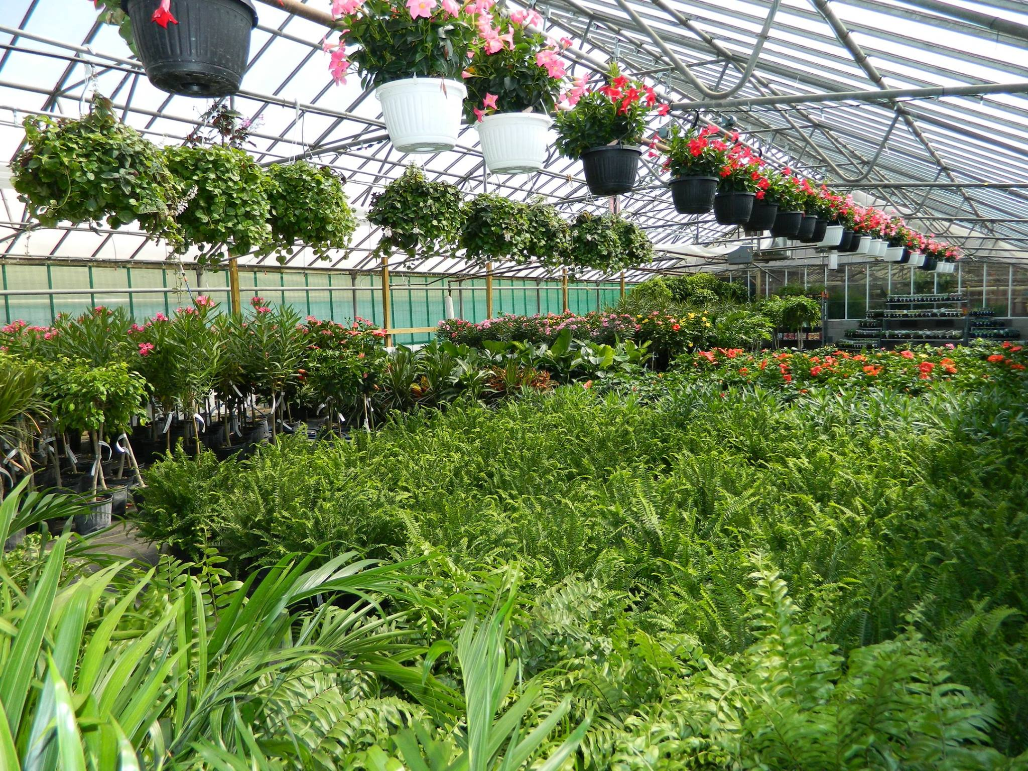 Image result for Seasonal Greenhouse