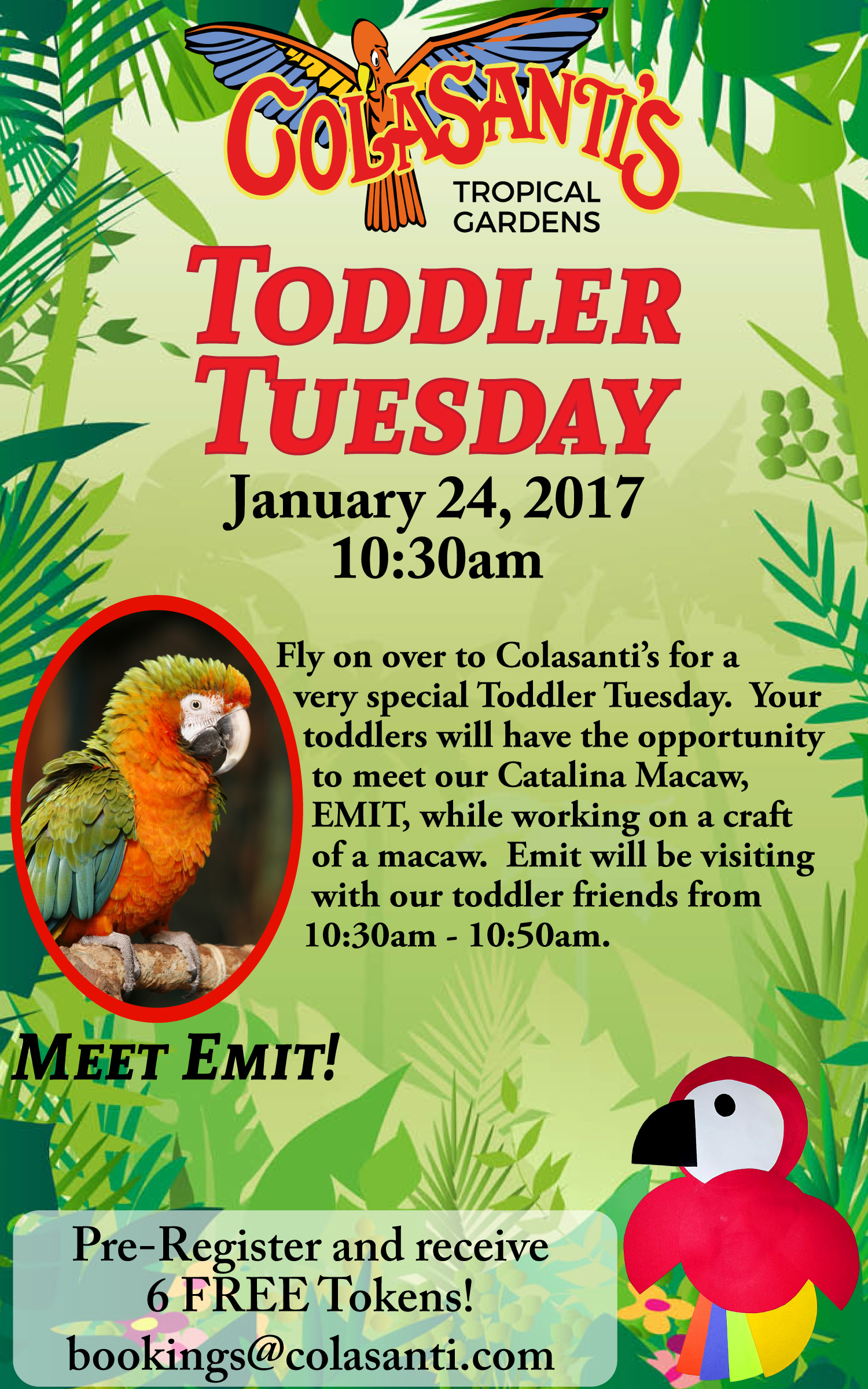 Colasanti's Toddler Tuesday Jan 24, 2017 Macaw