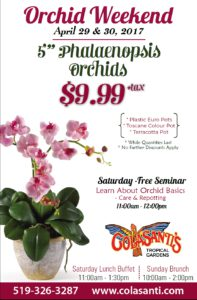 Orchid Weekend at Colasanti's