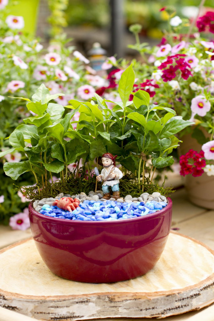 Fairy Garden Classes at Colasantis