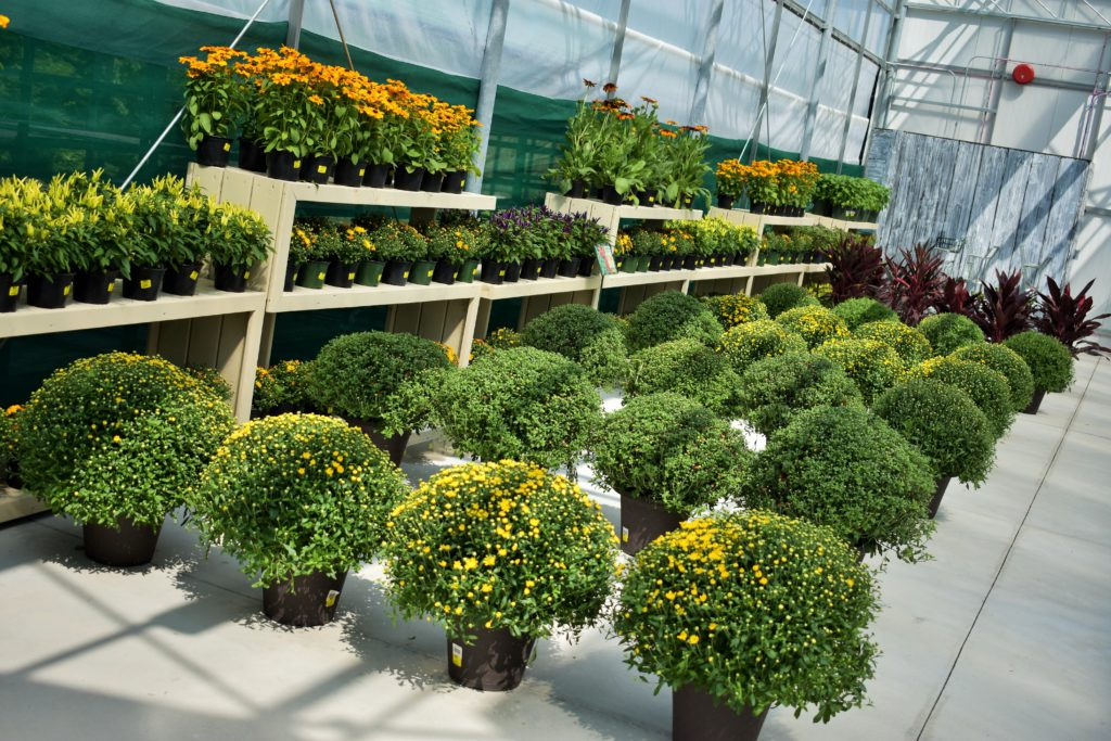 Colasanti's New Seasonal Greenhouse August 26, 2017