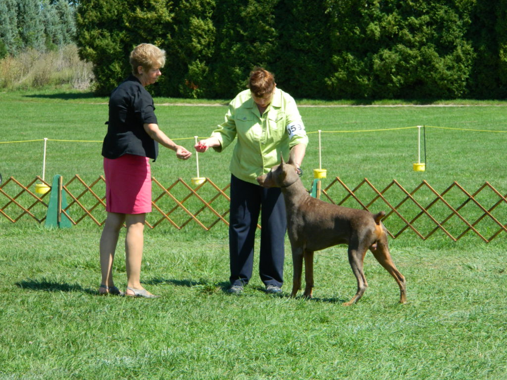 Essex County Kennel Club Dog Show at Colasanti's 2016